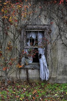 Who peered out of this window?  Were they awaiting a lover, watching a child play in the yard,  seeking solace and comfort from a different perspective?  A window means many things to many people. There's fierce emotion on the sills.