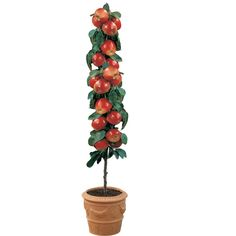Muita gente gostaria de plantar verduras, hortaliças e frutas em sua casa. Só que por vezes o espaço não o permite. Ou porque a varanda do apartamento é peq
