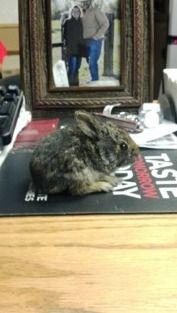 Little Bunny at Steinhauser's!