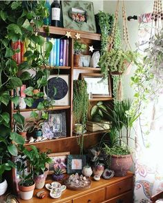 Oh my gosh! I want a green room like that one day! The Best of home indoor in Oh my gosh! I want a green room like that one day! The Best of home indoor in Oh my gosh! I want a green room like that one day! The Best of home indoor in Room With Plants, Green Rooms, Aesthetic Rooms, My New Room, Indoor Plants, Indoor Garden, Sweet Home, House Design, Interior Design