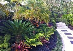 Multicolor tropical garden with sago Palm, bromeliads, ferns, and Persian shield