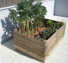 I want to grow my own herbs but don't want to dig up the back yard - this is a perfect solution!