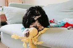 Make your dog a cute, easy DIY octopus toy. He'll love it, we promise! ;)