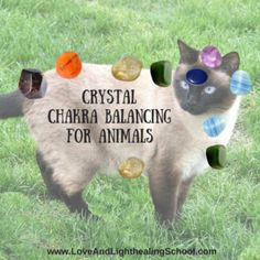 Crystal Chakra Healing for Animals - Love & Light School of Crystal Therapy Chakra Healing, Healing Spells, Healing Meditation, Crystal Healing, Meditation Music, Mindfulness Meditation, Healing Stones, Angel Healing, Chakra Crystals