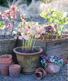 Winter-Blooming Plants for Indoors