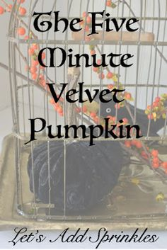 Little velvet pumpkins are all the rage. They have some in the floral department at our Tom Thumb Grocery Store but they didn. September Morn, Seasonal Decor, Fall Decorations, Velvet Pumpkins, Cool Things To Make, How To Make, Decorating Blogs, Fall Recipes, Sprinkles