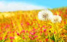 summer-flower-images-and-wallpapers-14.jpg
