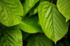 Natural Beauty, Plant Leaves, Fresh, Nature, Plants, Naturaleza, Plant, Nature Illustration, Off Grid