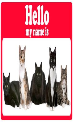 43 Best Cat Names images in 2018 | Funny cat names, List of cat