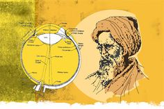 """Arround the year 1000 """"Ibn al- haytham's""""Proved that humans see objects by light reflecting off of them and entering the eyes,dismissing Euclid and ptolemy's theories that light was emitted from the eyes itself .This great muslim physicist also discovered the camera obscura and phenomenon,which explains how the eyes sees images upright due to the connection between the optics nerve and the brain ."""