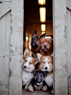 When I have my own house this is what it will be like when you come to my door! There are way too many dog that I want :)