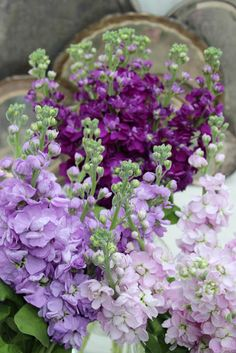 A Bunch for the Weekend-# 77-Pink and Purple Stock Flowers-Ingrid Henningsson-Of Spring and Summer
