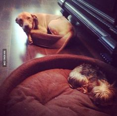 I bought my dogs beds, but I don't think they get it