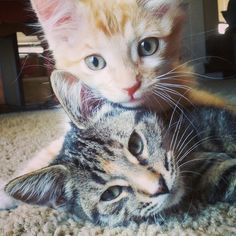 reminds me of my cats when they were young!