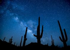A magical image collection of some star gazing shots, a look at the night sky.