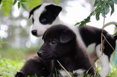 Our newest puppies at Team Active Lapland.
