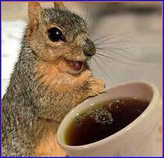 Happy Squirrel | happy squirrel