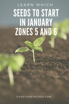 What seedlings can you start in January?- Zones 5 & 6 – Our Stoney Acres What seedlings can you start in January?- Zones 5 & 6 – Our Stoney Acres,Gardening What seedlings can you. Growing Herbs Indoors, Starting Seeds Indoors, Growing Seeds, Growing Vegetables, Growing Tomatoes, Zone 5 Plants, Plant Zones, When To Plant Seeds, Backyard Vegetable Gardens