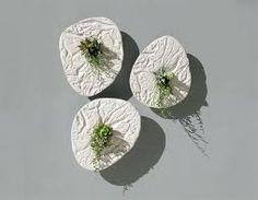 「多肉植物 コンクリ」の画像検索結果