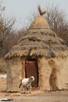 Goat in front of Himba Village in Namibia