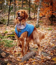 Funny Dogs, Cute Dogs, Hiking Dogs, Commute To Work, Dog Travel, Pet Carriers, Dog Coats, Dog Training Tips, Dog Owners