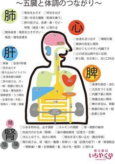 見島発 『五臓六腑を知る@』 - 見島人(Mishiman) Study Japanese, Chinese Medicine, Reflexology, Acupuncture, Things To Know, Healthy Choices, Body Care, Health And Beauty, Health Care