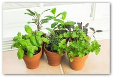 Indoor Vegetable Gardening, Indoor Gardening Tips, Indoor Container Gardening Ideas