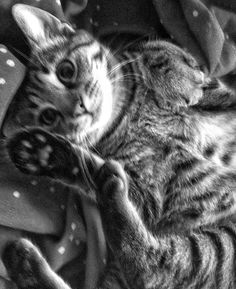 M'y cat it's so cute !