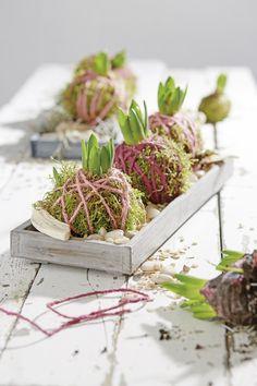 Versier een amaryllisbol met mos en gekleurd touw voor het voorjaar #intratuin #voorjaar #kamerplanten Spring Decoration, Diy Interior, Flower Crafts, Terrarium, Flower Power, Flower Arrangements, Things To Do, Goodies, Projects To Try