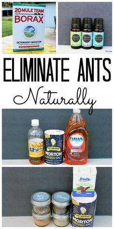 Learn how to eliminate ants naturally from your home! Great all natural ways to get rid of ants!