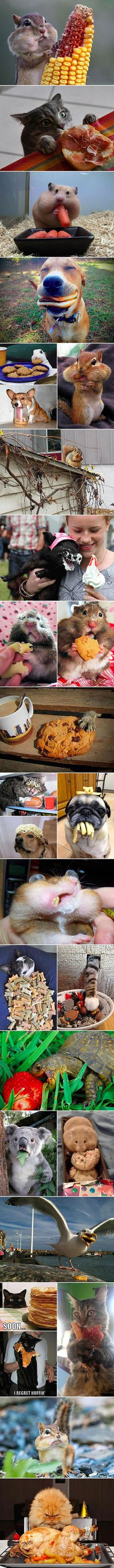 Animals that have already given up on their new year's diets...