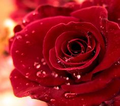 A Single Red Rose Wallpaper Flowers Nature Wallpapers in jpg Rose Flower Hd, Rose Flower Pictures, 3d Rose, Flower Images, Beautiful Flower Names, Beautiful Flowers Pictures, Beautiful Rose Flowers, Love Flowers, Flowers Nature