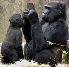 24 animali che si sono scordati di non essere umani - Corriere.it