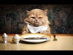 Gatti Pazzi - Gatto al ristorante - PROVA A NON RIDERE - YouTube