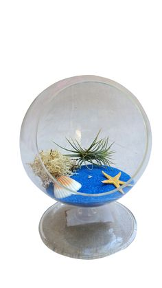 Blue Circle Terrarium