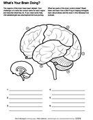 Biology Coloring Pages & Worksheets   ASU - Ask A Biologist