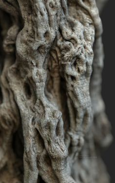 3d Tree, A Thousand Years, Olive Tree, Science Nature, Wood Grain, Year Old, Lion Sculpture, Statue, Artwork