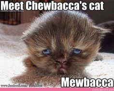 Meet Chewbacca's Cat. |