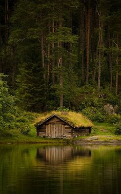 Norwegian boathouse and forest of tall trees