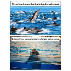 Derita Lumba-Lumba Sirkus Dibalik Aksinya yang Pintar | WAJIB BACA