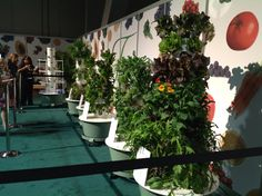Tower Garden Display at California Spring Conference. 3 -4 weeks of growth. www.ShelbyMeyer.TowerGarden.Com