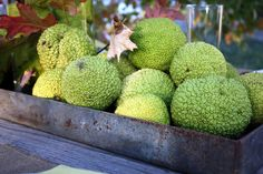 Sweet Something Designs: Harvest Green Tablescape Apple Centerpieces, Apple Decorations, Hedge Apples Uses, Apple Festival, Baby Shower Fall, Fall Baby, Changing Leaves, Apple Harvest, Fall Arrangements