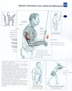 Free workouts, tips and exercise images for all other muscles on this page > BodyBuilding Tips & Tricks Muscle Fitness, Mens Fitness, Academia Fitness, Muscle Anatomy, Triceps Workout, Fitness Nutrition, Excercise, Gym Workouts, Chest Workouts