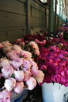 peonies <3 I can only imagine the heavenly smell!