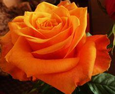 roze rozowe - Szukaj w Google