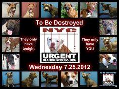 All animals on DEATH ROW    https://www.facebook.com/photo.php?fbid=475630769116474=a.275017085844511.78596.152876678058553=1