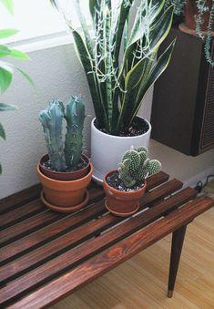 decorando-casa-móveis-madeira-plantas-espada-de-sao-jorge-cactos Indoor Garden, Garden Plants, Indoor Plants, Home And Garden, Cactus Plante, Plants Are Friends, Cactus Y Suculentas, Green Life, Cacti And Succulents