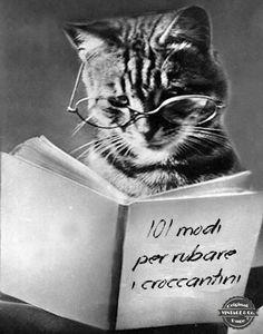 Non si possiede mai un gatto. Semmai si è ammessi alla sua vita, il che è senz'altro un privilegio. - Beryl Reid  ★ Vintage & Co. ★  Pinterest: http://www.pinterest.com/VintageeCo/aforismi/ -  Facebook: https://www.facebook.com/VintageeCo