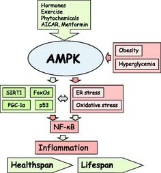 How to Increase AMPK for Fat Burning and Longevity - Siim Land
