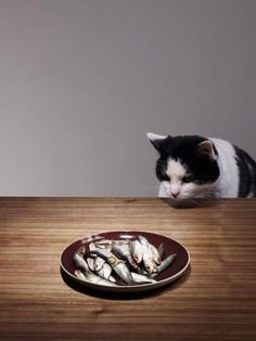 Hora de cenar... Dinner time...